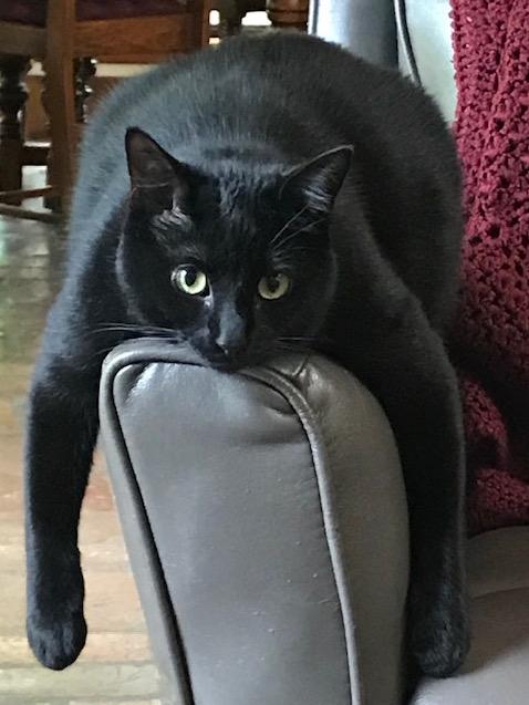 SteelMagnolia.cat